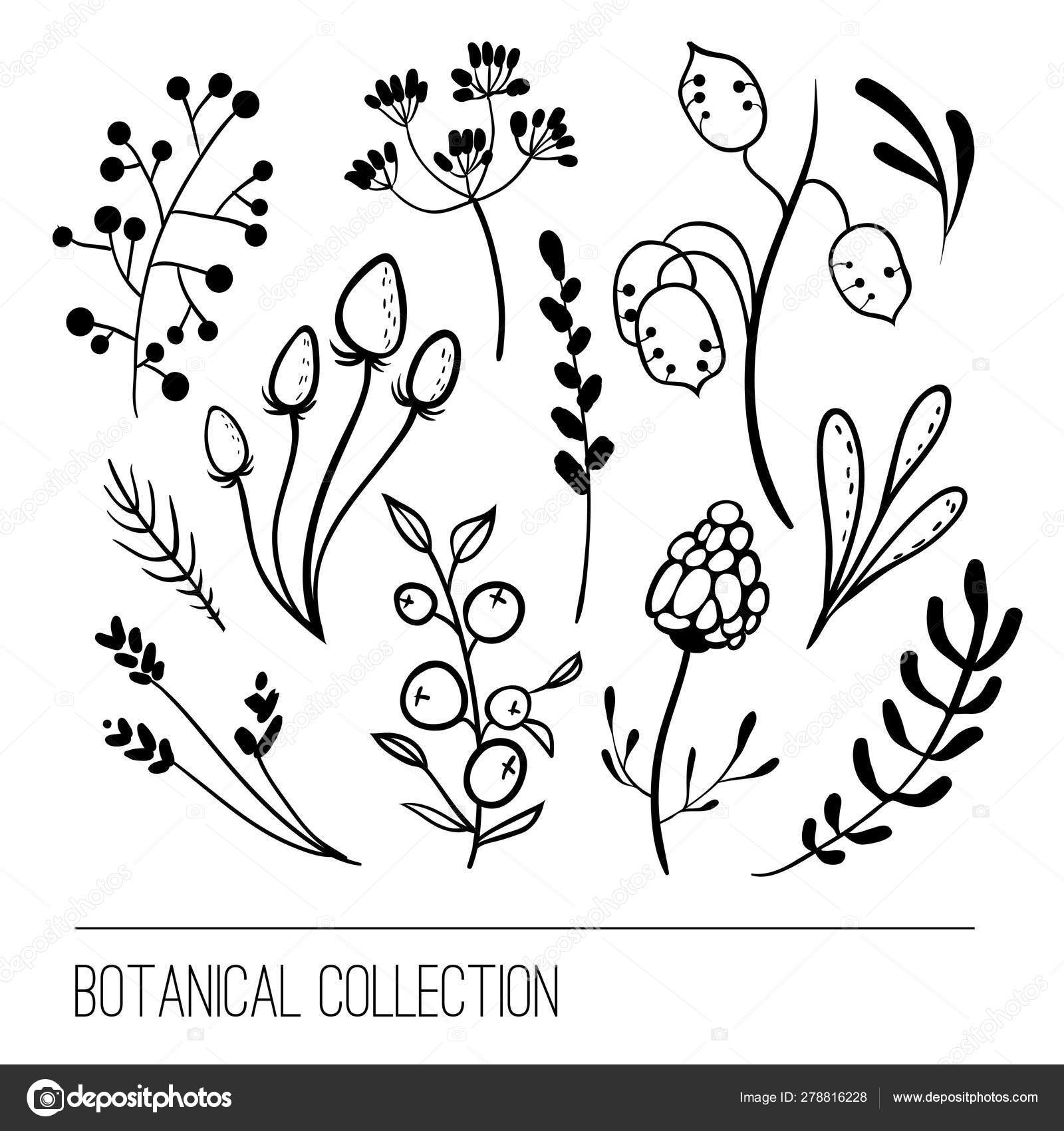 Botanical collection. Flower simple graphic design. \u2014 Stock