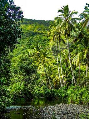 Tropical Paradise in the Waipio Valley on the Big Island of Hawaii