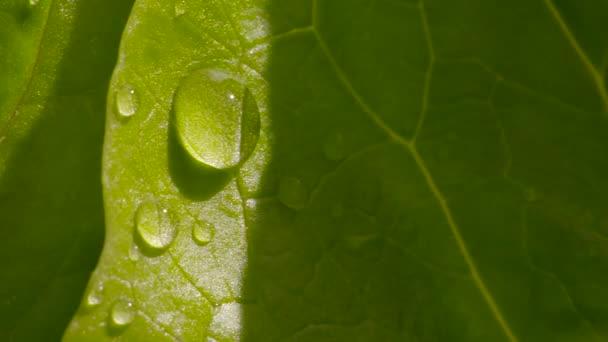 Detailní pohled kapky vody na zelený list