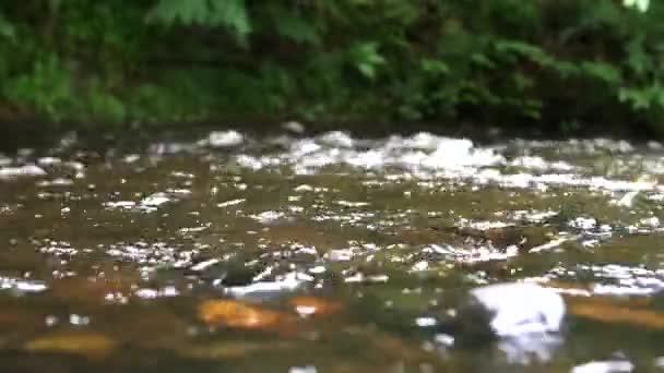 víz folyó patak áramlásának természet