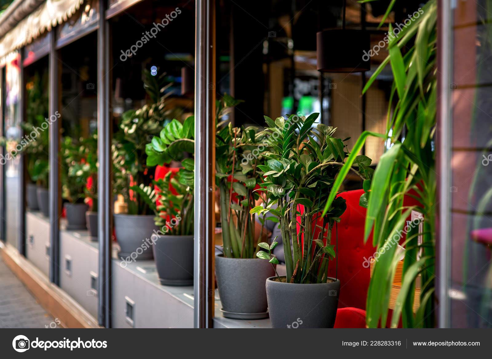 Café Aire Libre Decorado Con Macetas Con Flores Terraza