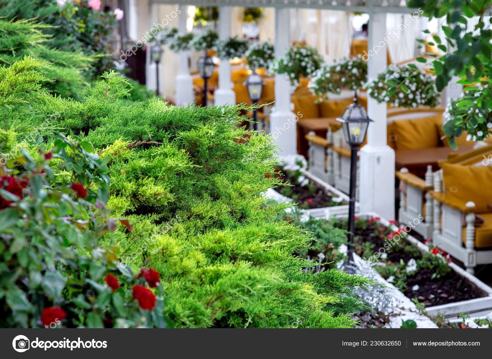 Diseño Paisaje Terraza Del Restaurante Nitidez Las Plantas