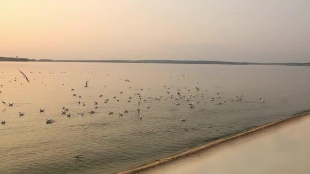 Rackové na povrchu vody při západu slunce