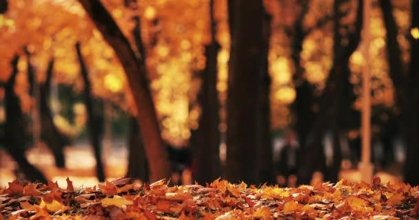Podzimní krajina v parku za slunečného a teplého dne.