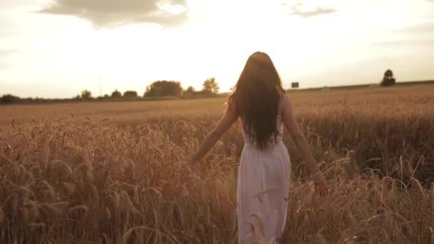 Krásná mladá žena má život chůze na pšeničném poli při západu slunce