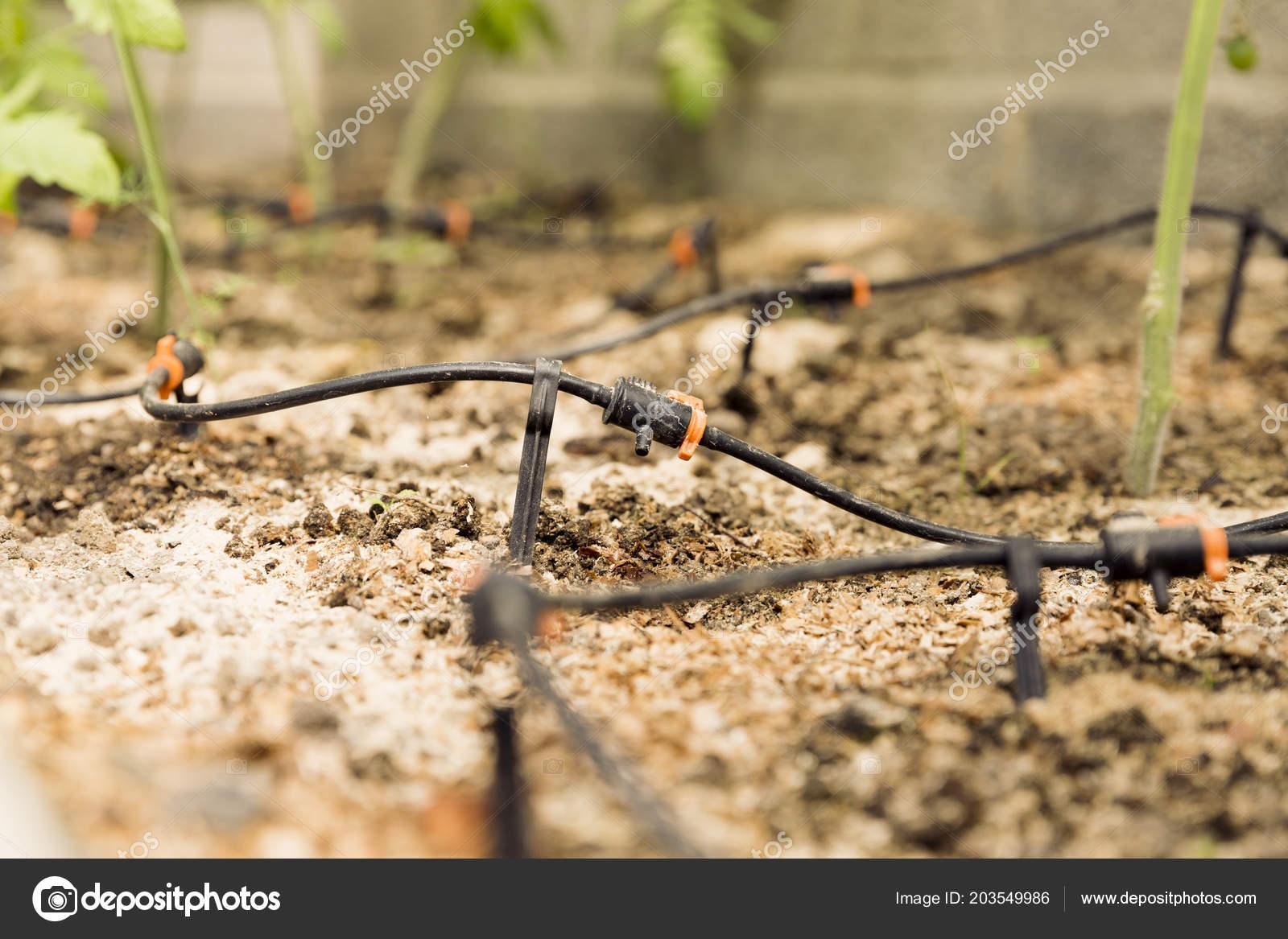 Sprinkler Systems Drip Irrigation Watering Greenhouse Garden ...