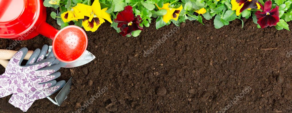 Gardening tools on soil background. Planting spring pansy flower
