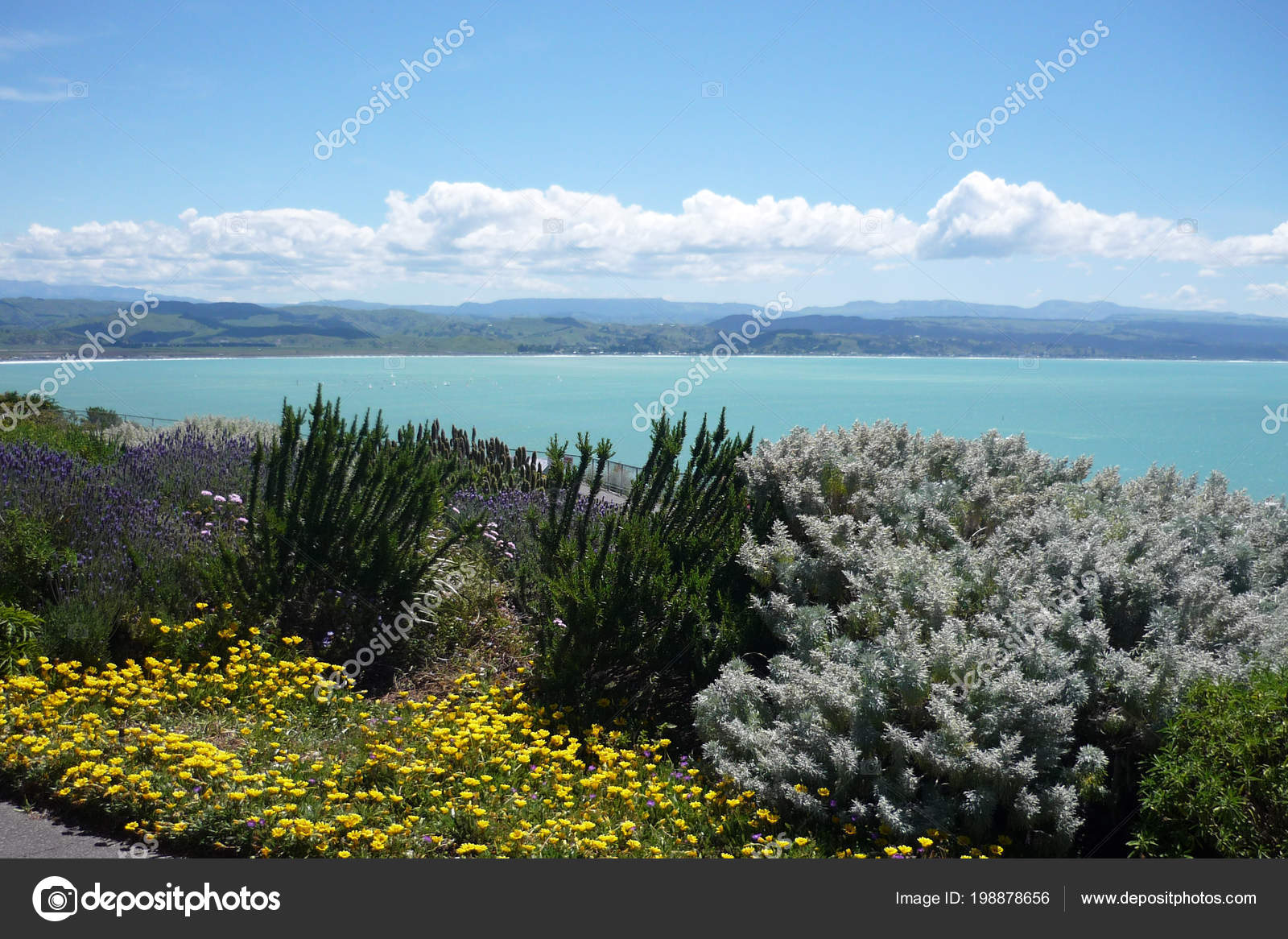 blooming flowers pacific coast napier new zealand stock photo