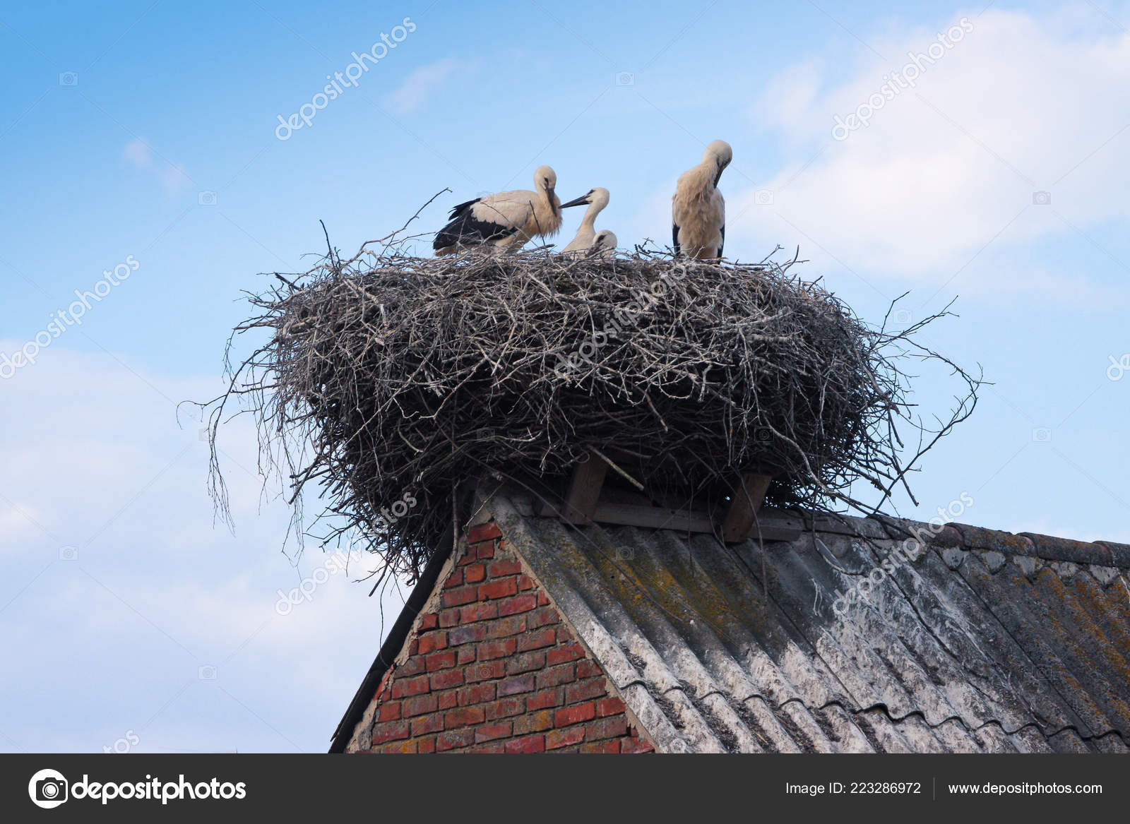 view family stork birds seating nest roof top stock photo