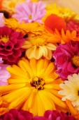 Deep yellow calendula in selective focus among bright mix of summer flowers
