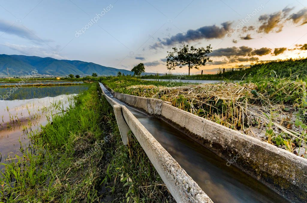 Rice fields with concrete water irrigation system at sunset