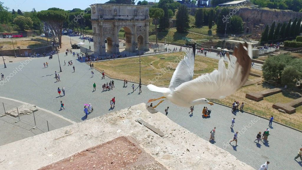 Seagull bird at wall with The Arch of Constantine view from the Colosseum, in Rome, Italy