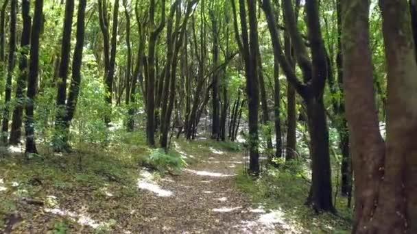 walking through rain forest in Canary islands.