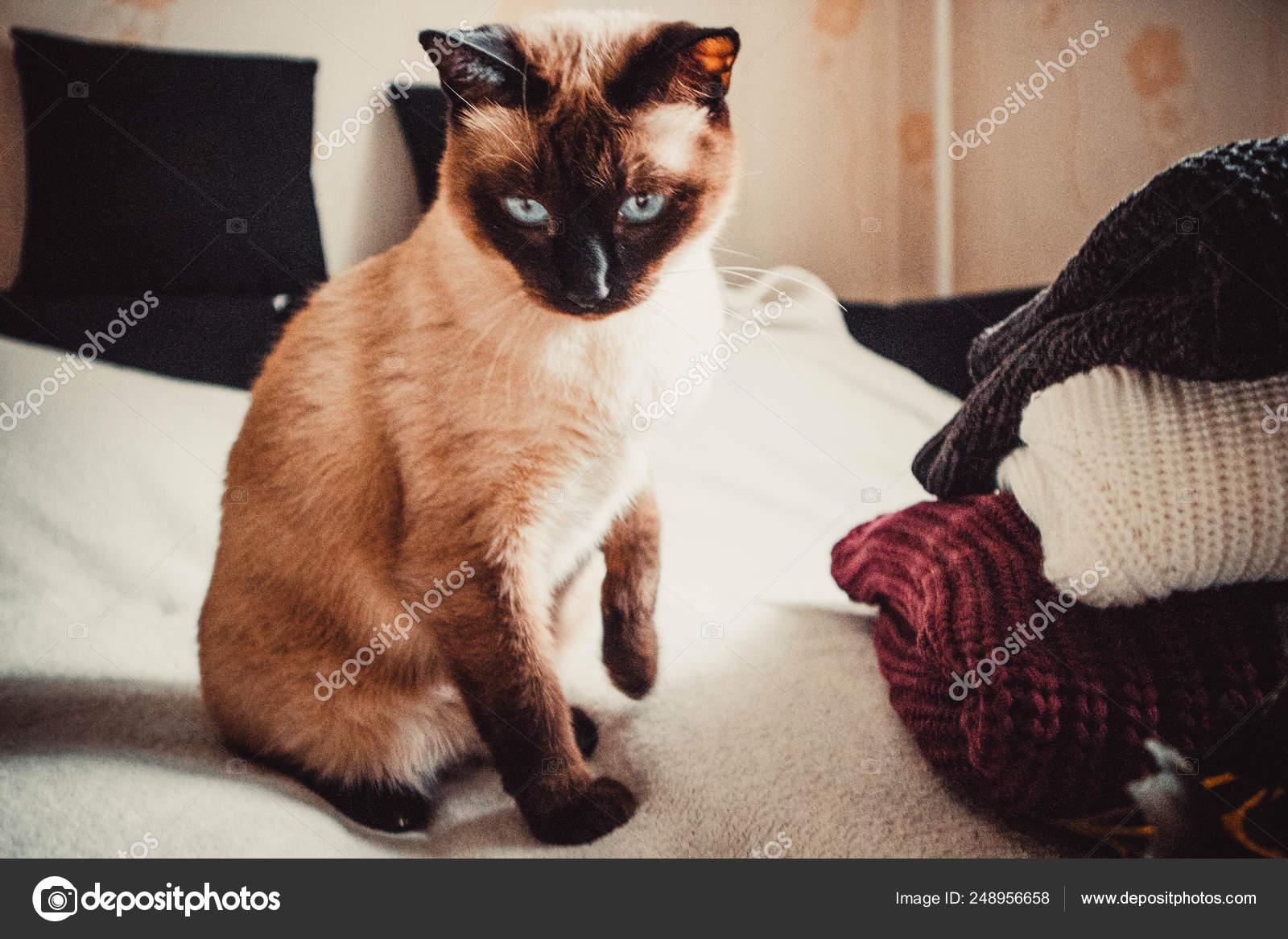 Cat Sweaters Soft Background \u2014 Stock Photo © sysoniuk.irina