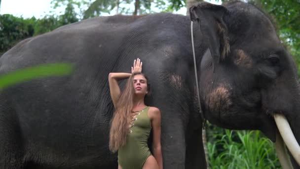 Schönes sexy adult langhaarige Mädchen posiert in der Nähe von Elefanten, Modell Klammern gegen riesige indische Elefanten im Dschungel