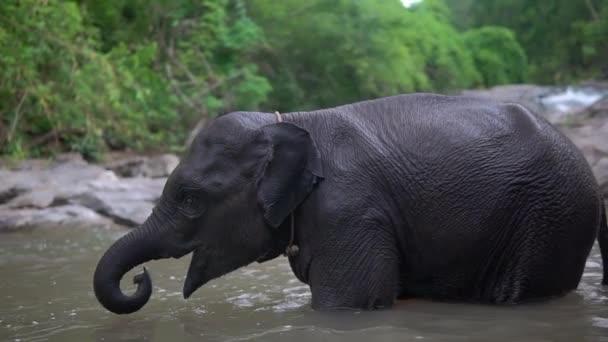 Elefantenbaby amüsiert sich am Fluss, es amüsiert sich, spielt im Wasser