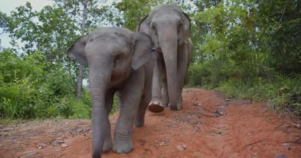 slon a slon kráčející z červeného jílu
