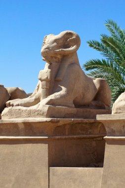 "Картина, постер, плакат, фотообои ""древнеегипетское божество сфинкса в храме карнака в луксоре "", артикул 200931900"