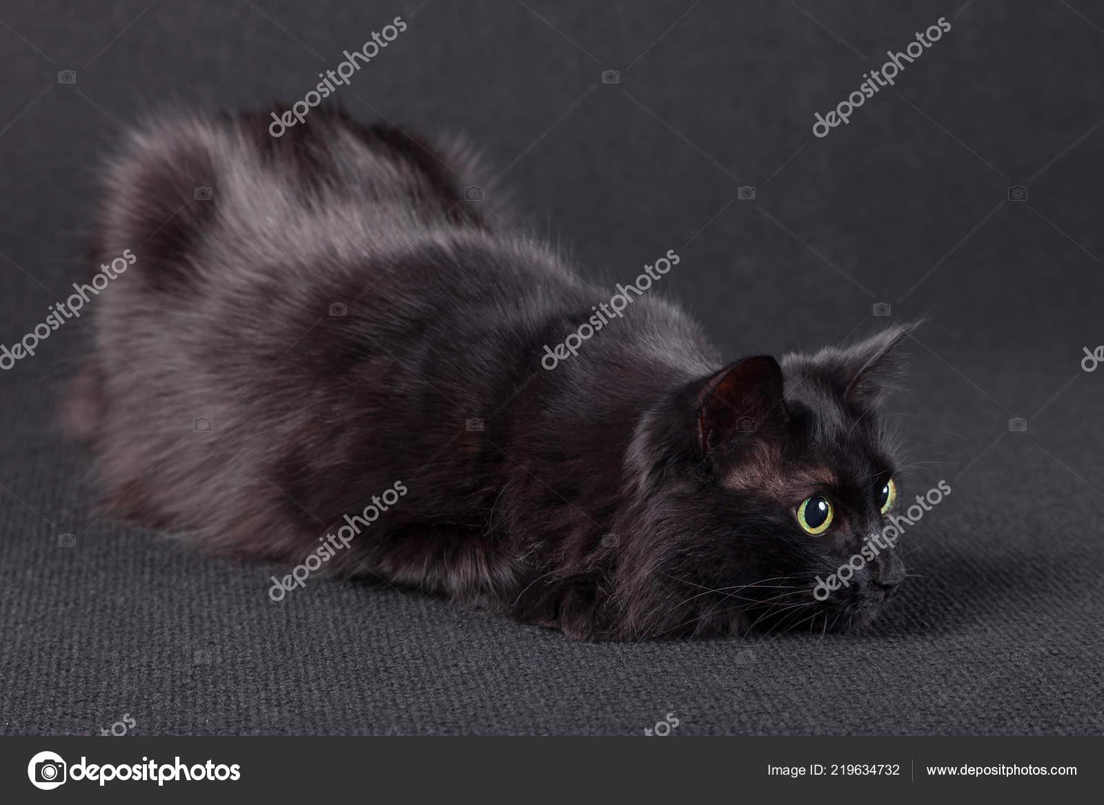Černé vlasy kočička pic