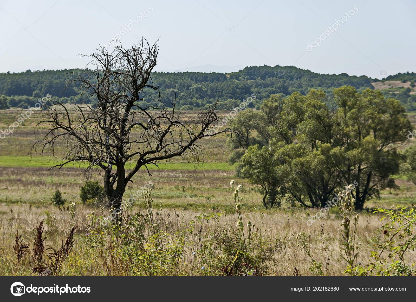Landscape Summer Nature Green Glade Flower Forest Big White Willow