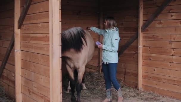 Krásná dívka čistit koně v kabince