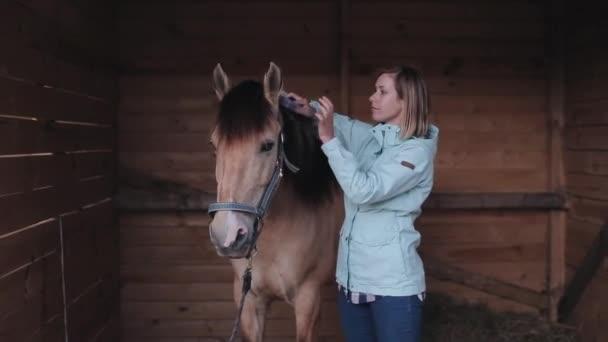 Ženy jezdec češe hřívu koně ve stáji