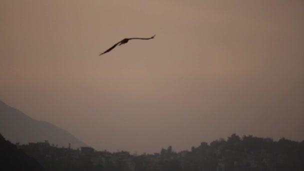 Ein großer Vogel fliegt in der herannahenden Dämmerung am grauen Himmel gegen die Silhouetten von Bergen, die von Bäumen bedeckt sind. Nahaufnahme