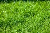 Fotografie Grass
