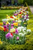 zár megjelöl kilátás gyönyörű színes ranunculus virágok Park