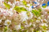 pohled veselý strom kvetoucí květiny pozadí na plochu