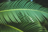 Fotografie close up view of beautiful green palm leaves
