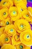 Fényképek zár megjelöl kilátás a gyönyörű sárga ranunculus virágok hátteret
