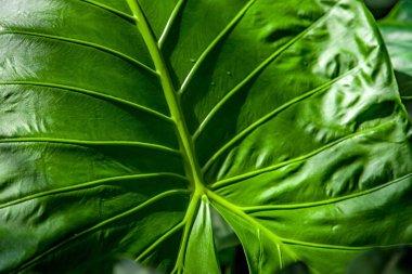Full frame of green leaf texture stock vector
