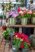 Fotografie Close up view of hortensia and peonies in buckets on market place