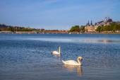 Fotografie zwei Schwäne am Fluss mit Stadtbild hinter in Kopenhagen, Dänemark