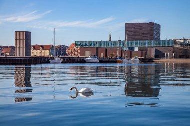 COPENHAGEN, DENMARK - MAY 6, 2018: swan swimming in calm water near moored boats and modern buildings in copenhagen, denmark