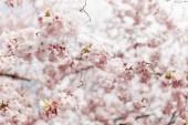 Photo Blossom