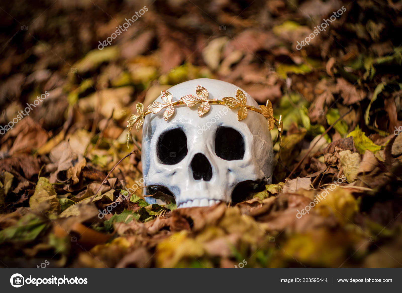 Crane Squelette Humain Roi Une Reine Portant Couronne Royale Feuille