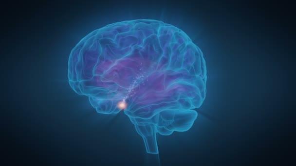 Lidský mozek hypofýzy vytváří endorfiny