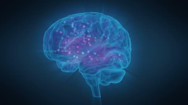 Excitation of Human Brain Zones, Brain Activity