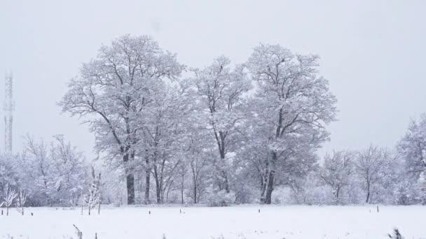 Strom na poli v zimě s padající sníh, modré. Sníh lesní sněžení. Vánoční zimní nový rok pozadí třesoucí se plamen scenérie. Bezešvá smyčka, koncept