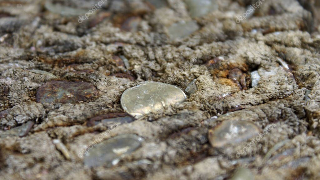 Old coins in stump