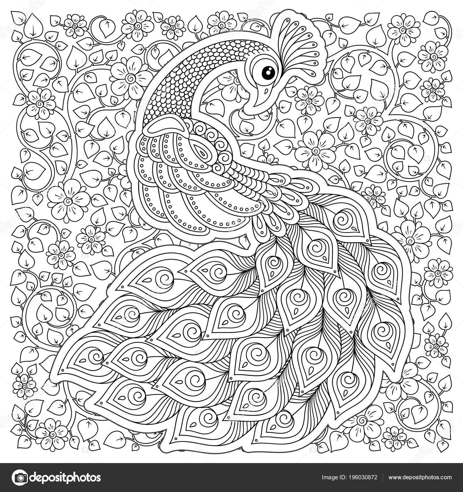 Peacock Coloriage Adulte Stress Noir Blanc Main Dessiné