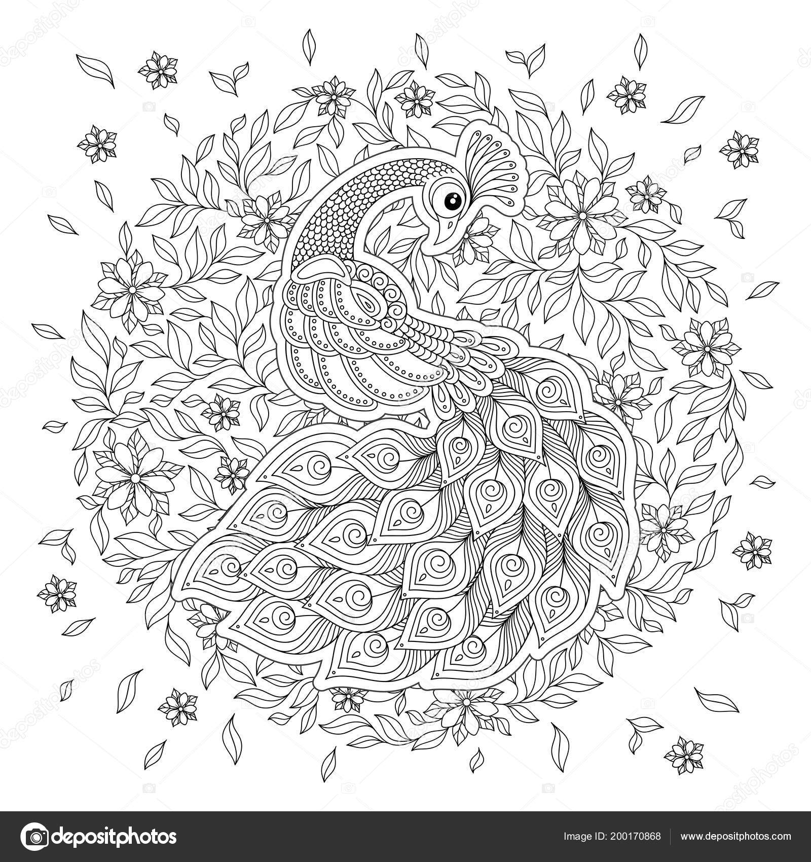 Peacock Coloriage Adulte Stress Noir Blanc Main Dessiné Doodle Pour