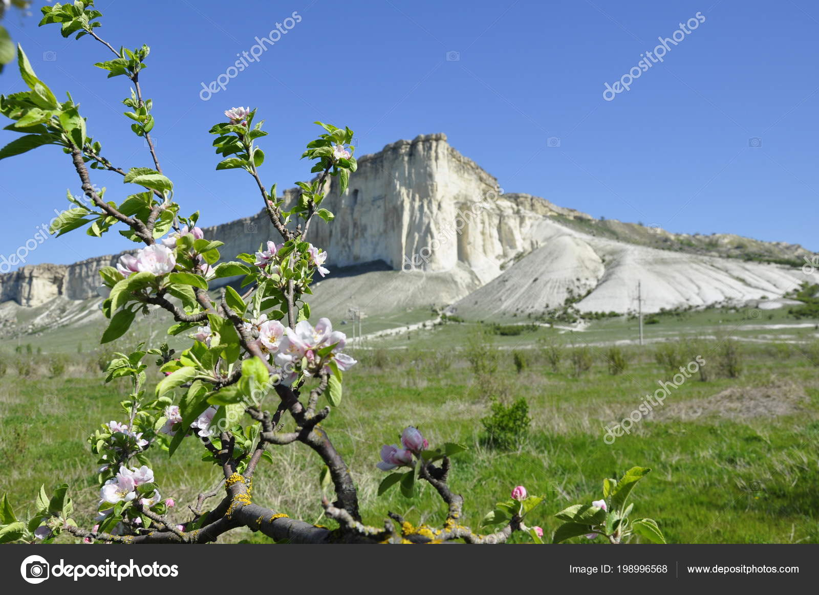 Mountain View Flowers Blooming Apple Tree Crimea White Rock Pink