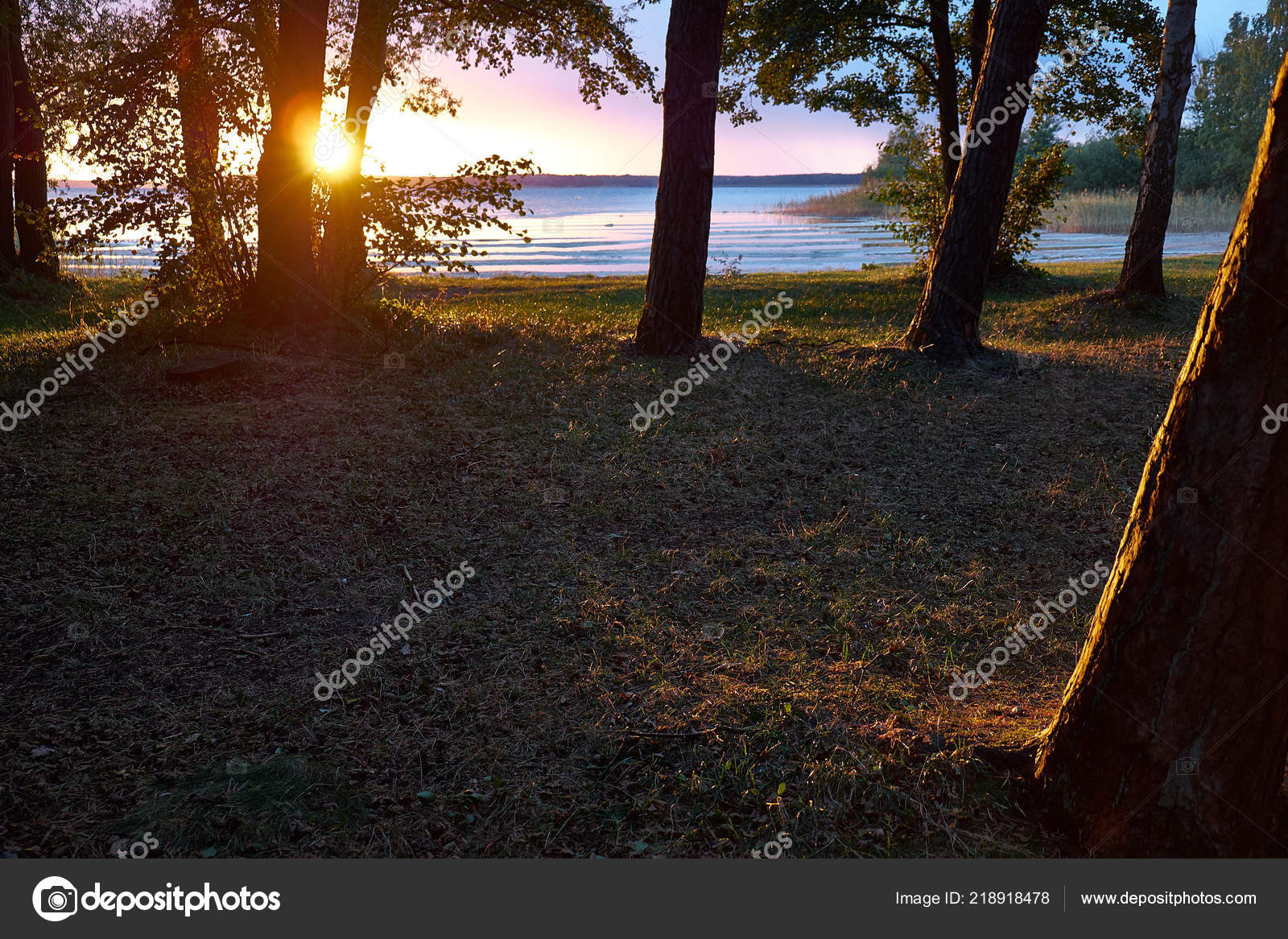 Sunset Golden Hour Lake Berlin Sun Shining Middle Two Trees