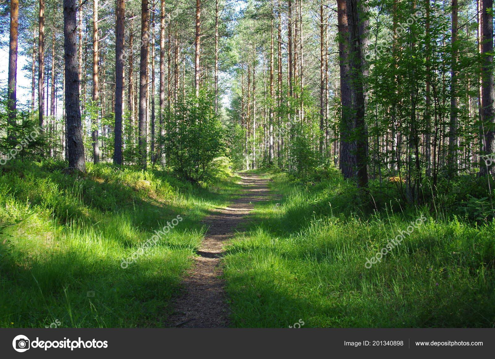 lonely bike trail silent forest dalarna ストック写真 findus27