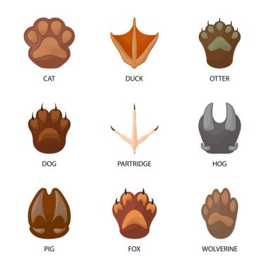 Vector illustration of animal and print icon. Set of animal and footprint stock vector illustration.