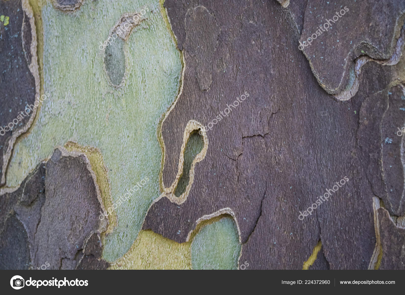 Multi Colored Tree Bark Background Texture Stock Photo