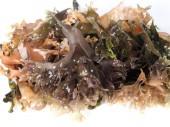 Irish Moss -  Carrageen Moss  Musgo de Irlanda. Binomial name: Chondrus Crispus. It is a sea vegetable or edible red seaweed.